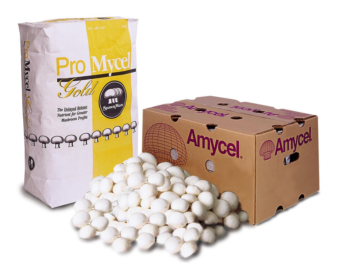 Amycel :: Supplements